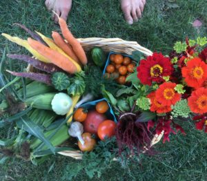 Summer CSA basket
